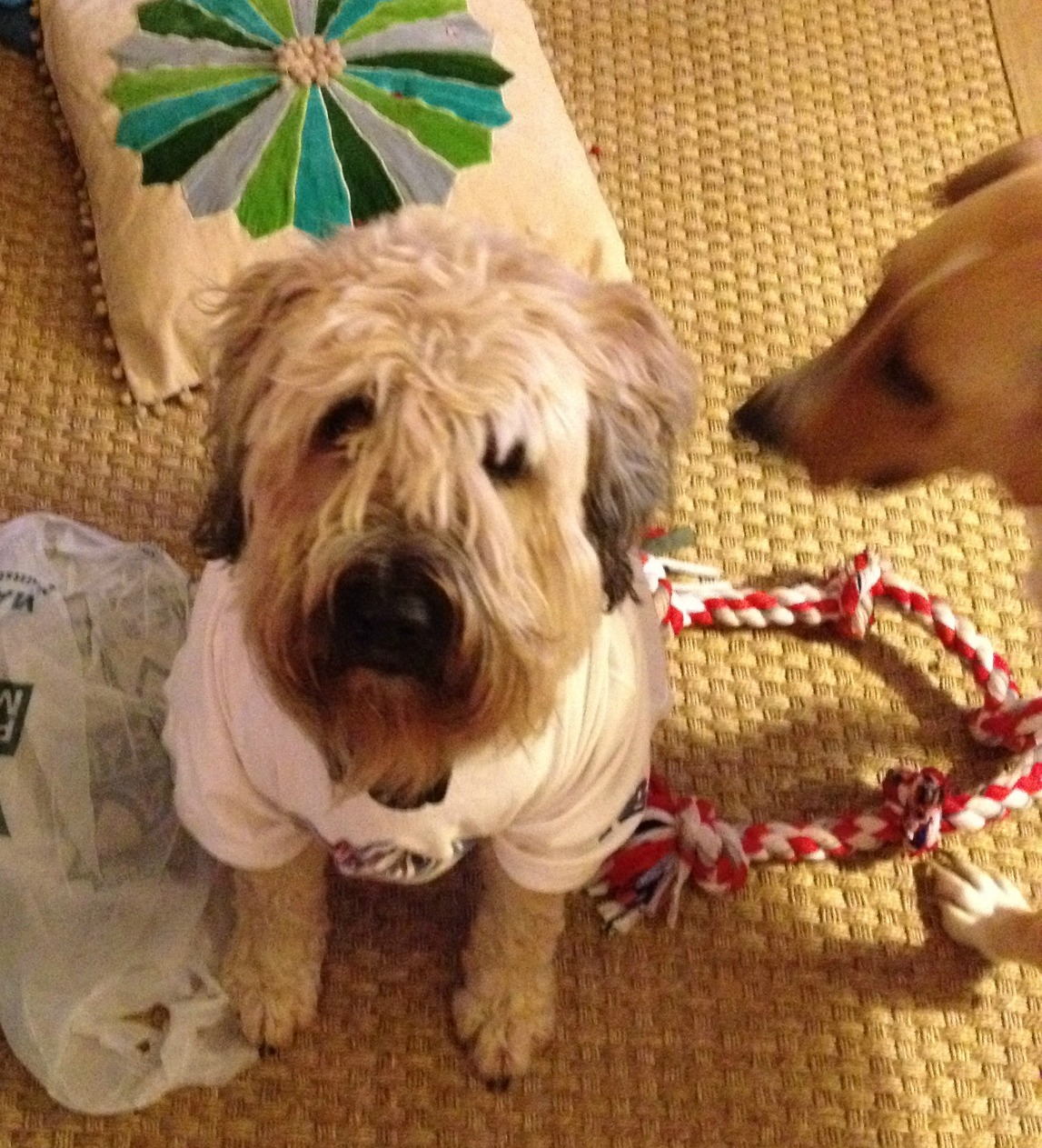 Diy Thunder Shirt Dogs And Storms