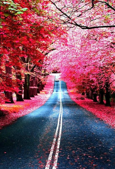 BURGUNDY STREET MADRIS SPAIN - I could not find the photographer for this photo...I would LOVE to credit them.
