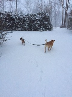 BEAN AND CHARLIE SHARE THE LEASH