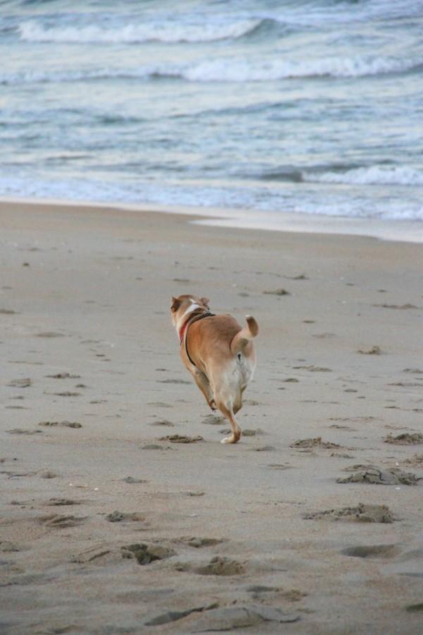Run Charlie!