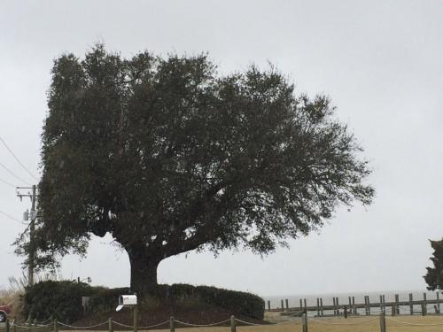 half a tree