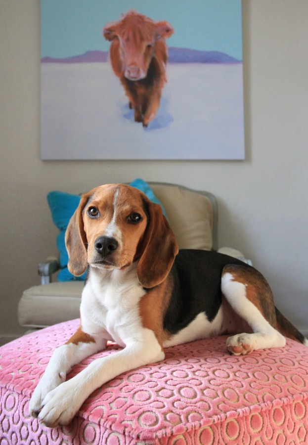 BEAN the beagle