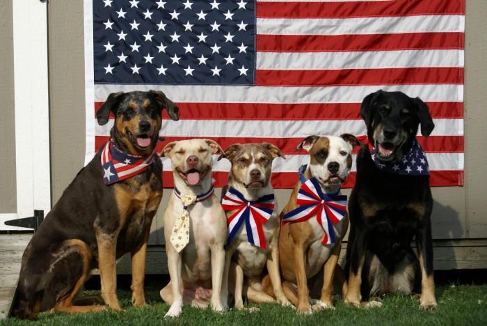 PATRIOTIC DOGS - NYLABONE