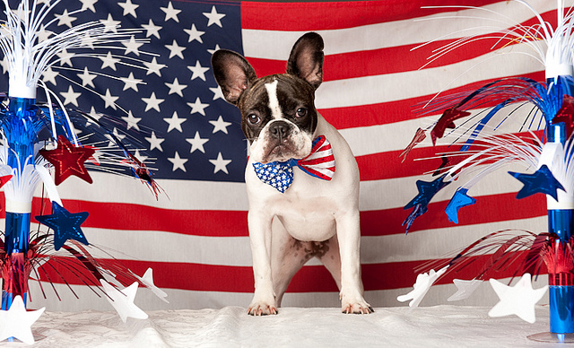 PATRIOTIC FRENCHIE - THE BAT PIG